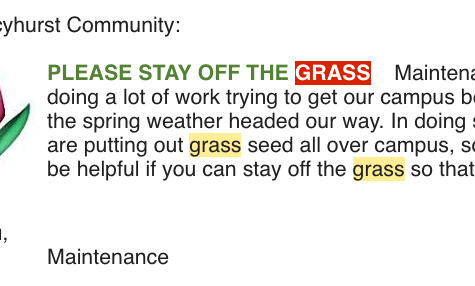 This grass was made for walking