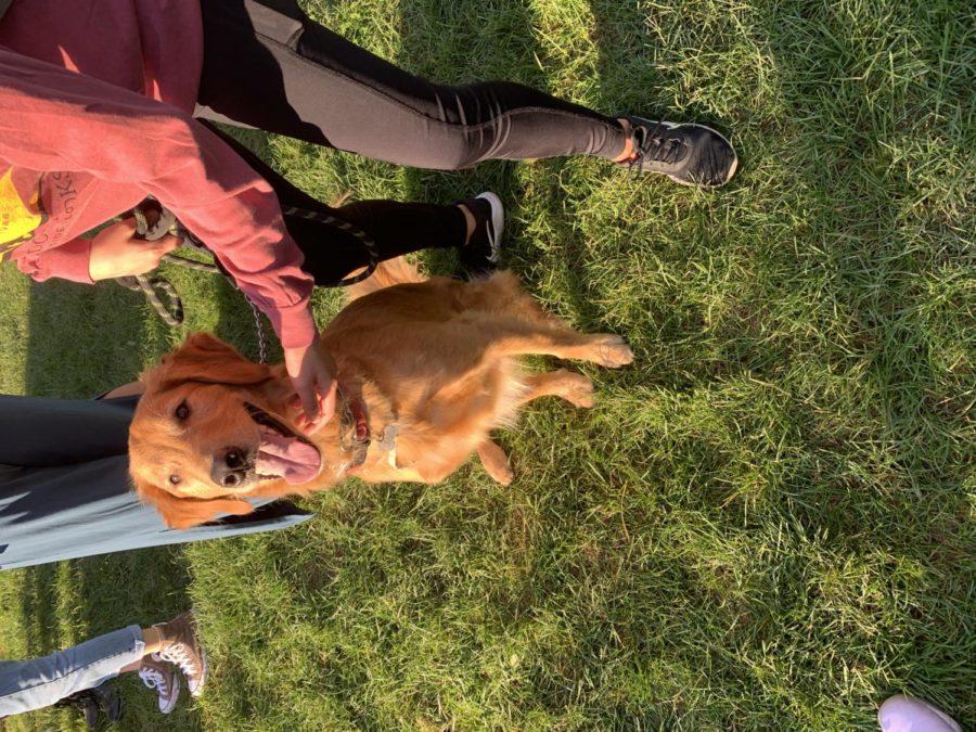 Campus Ministry hosts Dog Days