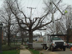 Two trees were cut down in Lewis Avenue by the Penelec company.