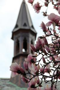 Taylor Rollins photo: The steeple on top Queen's Chapel, located off of the Christ The King Chapel in Old Main, is framed by magnolias.